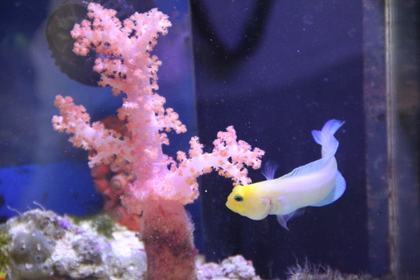 うおっち&ももの海水魚日記-30