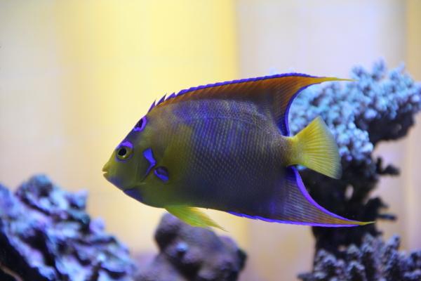 うおっち&ももの海水魚日記-昼2