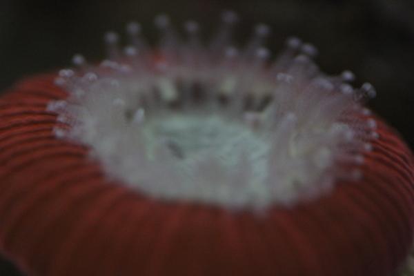 うおっち&ももの海水魚日記-OR2