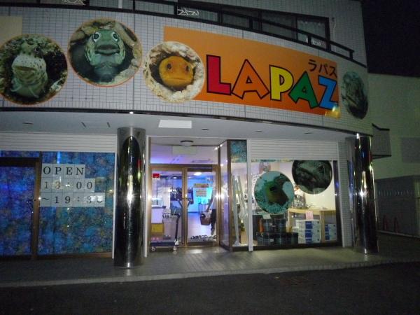 うおっち&ももの海水魚日記-ラパス1