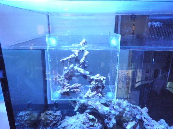 うおっち&ももの海水魚日記-BH2