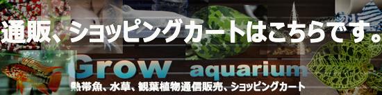 通信販売、ショッピングカート 東海 岐阜 熱帯魚 水草 観葉植物販売 Grow aquarium