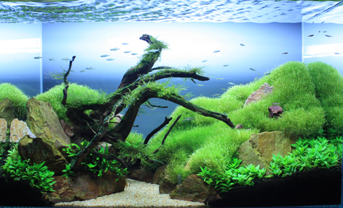 2012当店作品 532位 東海 岐阜 熱帯魚 水草 観葉植物販売 Grow aquarium