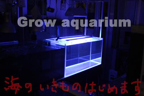 マリンアクアリウム 海水魚 東海 岐阜 熱帯魚 水草 観葉植物販売 Grow aquarium