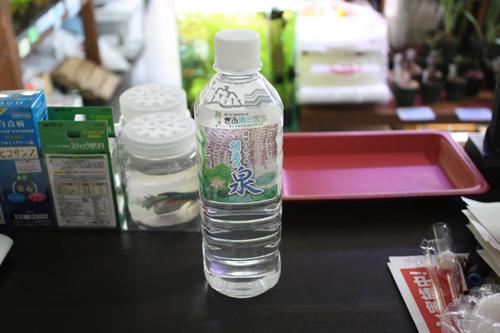 国体品!! 東海 岐阜 熱帯魚 水草 観葉植物販売 Grow aquarium