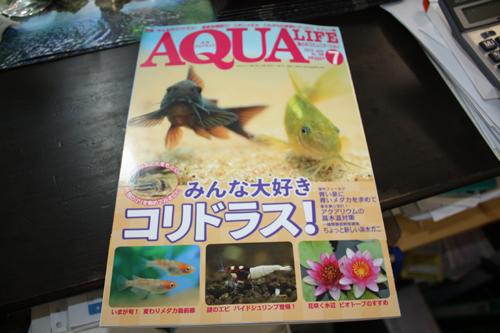 アクアライフ7月号入荷 東海 岐阜 熱帯魚 水草 観葉植物販売 Grow aquarium
