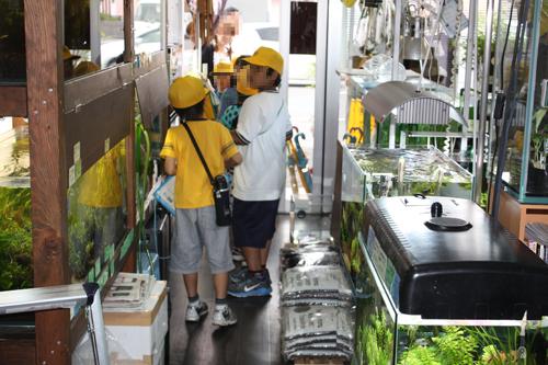 茜部ひみつ探検東海 岐阜 熱帯魚 水草 観葉植物販売 Grow aquarium
