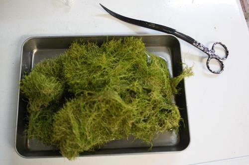 リシア 東海 岐阜 熱帯魚 水草 観葉植物販売 Grow aquarium