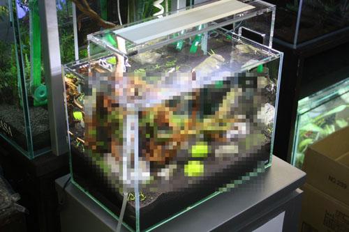 小さい水槽でも参加できます^^ 東海 岐阜 熱帯魚 水草 観葉植物販売 Grow aquarium
