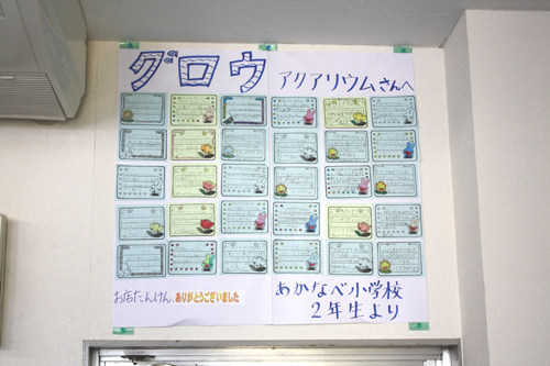 茜部ひみつ探検 東海 岐阜 熱帯魚 水草 観葉植物販売 Grow aquarium