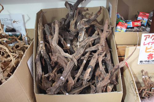 ADAホーンウッドS~Mサイズ 東海 岐阜 熱帯魚 水草 観葉植物販売 Grow aquarium