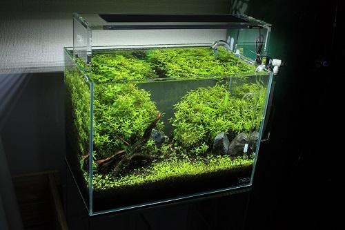 店頭レイアウト36w水草水槽 東海 岐阜 熱帯魚 水草 観葉植物販売 Grow aquarium