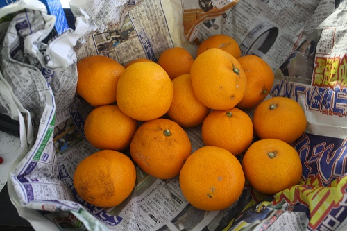 柑橘系の果物です。 東海 岐阜 熱帯魚 水草 観葉植物販売 Grow aquarium