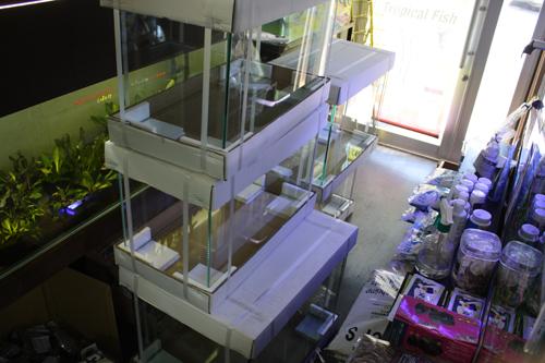 レッドビー水槽増設 東海 岐阜 熱帯魚 水草 観葉植物販売 Grow aquarium