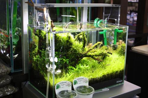 世界水草レイアウトコンテスト 東海 岐阜 熱帯魚 水草 観葉植物販売 Grow aquarium