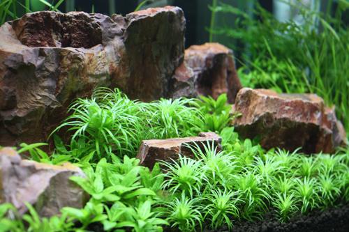 撮影水槽 東海 岐阜 熱帯魚 水草 観葉植物販売 Grow aquarium