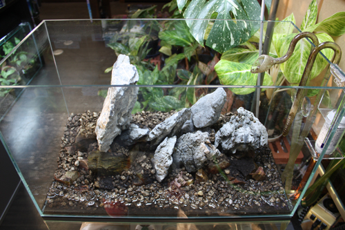 龍王石レイアウト 東海 岐阜 熱帯魚 水草 観葉植物販売 Grow aquarium