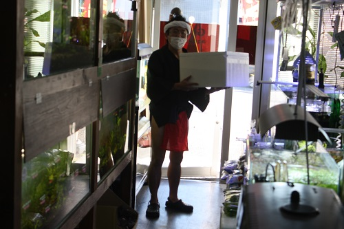 ディフェンバキアsp.タイガー 東海 岐阜 熱帯魚 水草 観葉植物販売 Grow aquarium