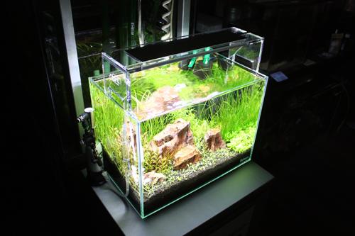 アクアライフ10月号に掲載水槽その後 東海 岐阜 熱帯魚 水草 観葉植物販売 Grow aquarium