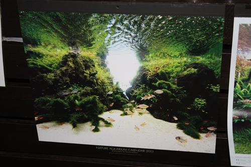 ADAカレンダー入荷 東海 岐阜 熱帯魚 水草 観葉植物販売 Grow aquarium