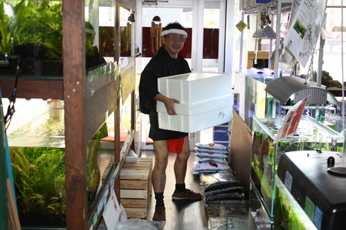 問屋担当ww 東海 岐阜 熱帯魚 水草 観葉植物販売 Grow aquarium