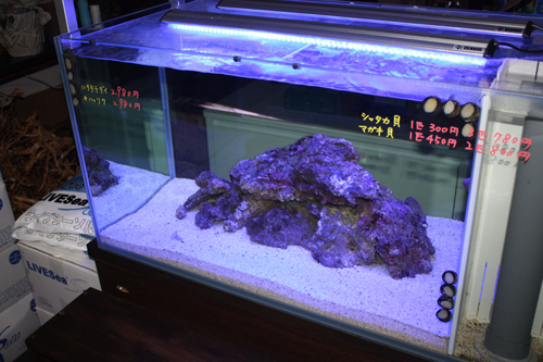 海水魚 東海 岐阜 熱帯魚 水草 観葉植物販売 Grow aquarium
