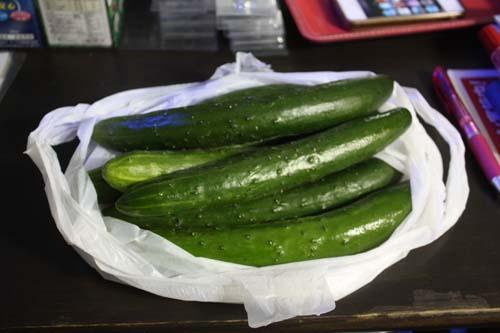 野菜キター! 東海 岐阜 熱帯魚 水草 観葉植物販売 Grow aquarium
