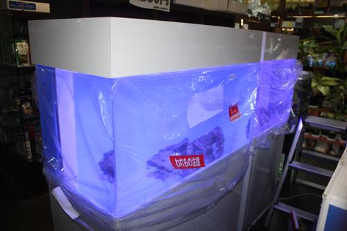 水槽出張メンテナンス 東海 岐阜 熱帯魚 水草 観葉植物販売 Grow aquarium