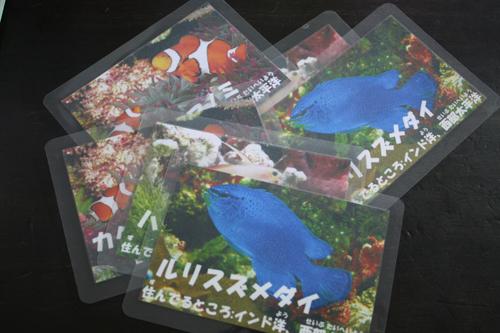 水槽出張リース 東海 岐阜 熱帯魚 水草 観葉植物販売 Grow aquarium