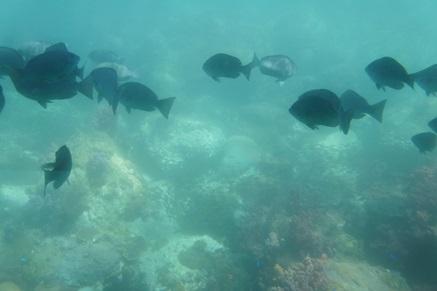 牛深海中公園3