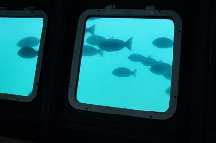 牛深海中公園8