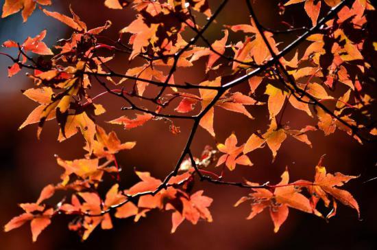 157_convert_20121126113641.jpg