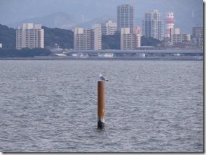 141127030 海上の杭で休むカモメ