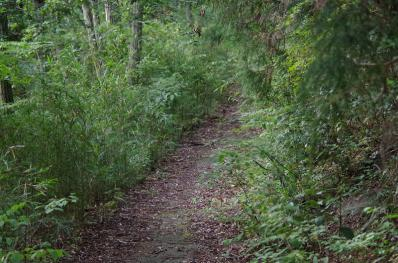 ハグロトンボがいた山道