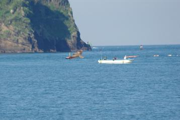 釣り船とトビ