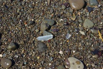 海岸のシーグラス