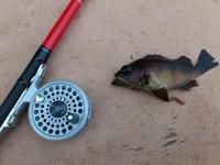 [狩猟] 海釣り
