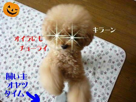10302_20121030195935.jpg