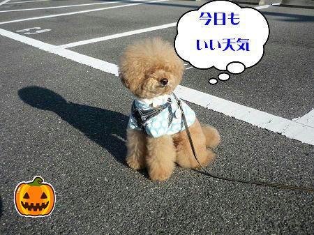 10305_20121030184145.jpg