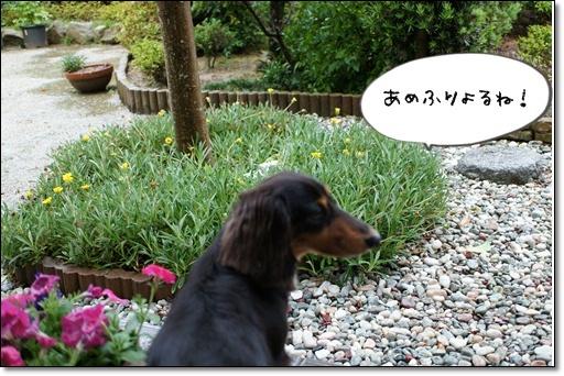 ダックスの花道
