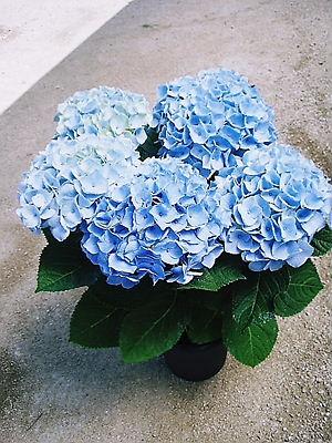 2012年05月12日_西安ブルー