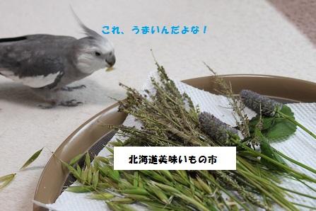 北海道美味いもの祭り~