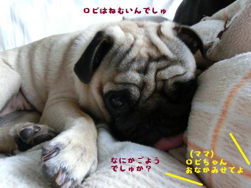 1_20120714160318.jpg