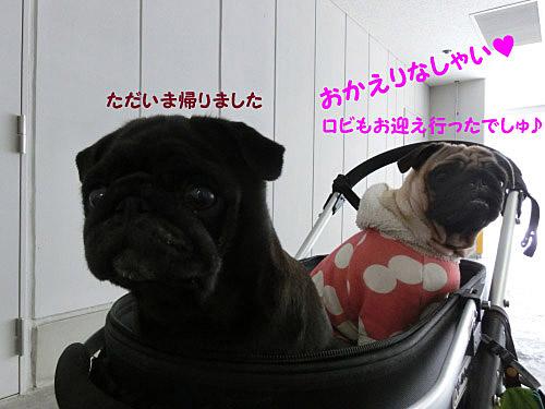 2_20121126185618.jpg