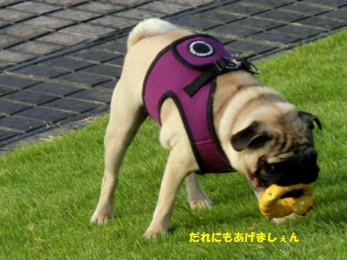 3_20121008220348.jpg