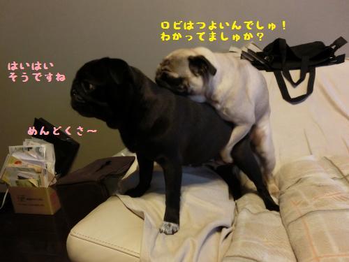 4_20120513223532.jpg