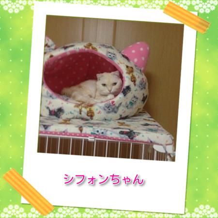 blog3_20121207152007.png