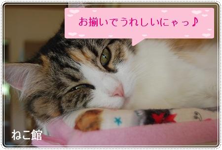 blog5_20121207145716.jpg