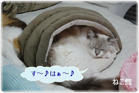 blog6_20121212215649.jpg