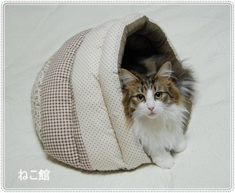 blog7_20121204130049.jpg